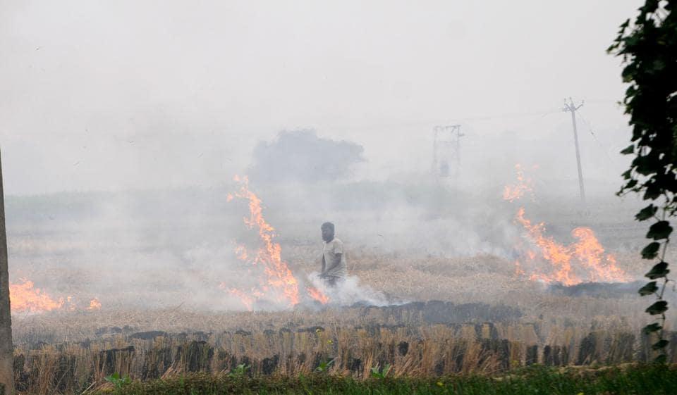 Farmer burning paddy stubble at Magwal village in Sangrur on Sunday.