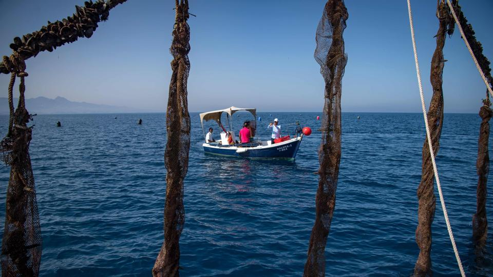 A boat sails past a mussel farm off the coast of Morocco's port city of Nador. With fish stocks declining in the Mediterranean, struggling Moroccan fishermen are hoping to turn to aquaculture as a way to secure their future. (Fadel Sena / AFP)