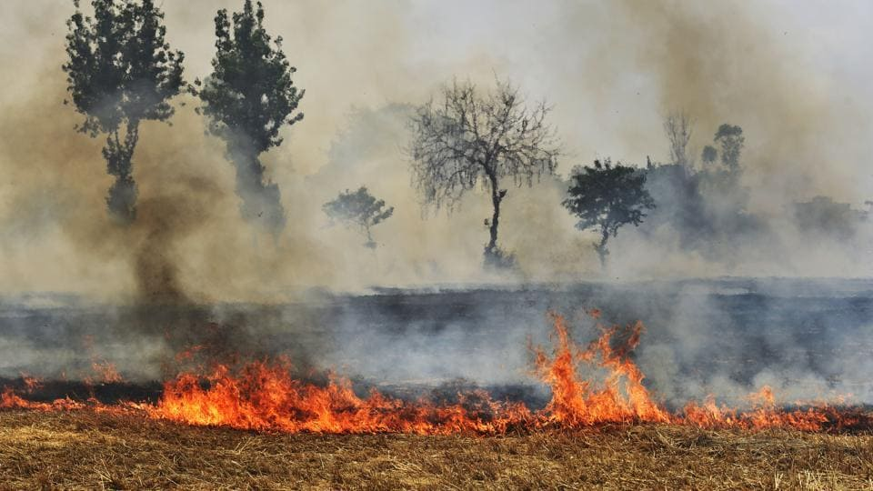 Punjab on Monday reported the highest number of farm fires this season – 5,953 in a single day.