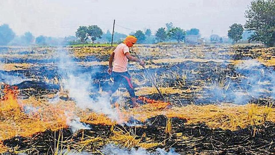Punjab's agriculture department officials has claimed that though the number of stubble burning cases may have increased this season, the total area under farm fires came down substantially.