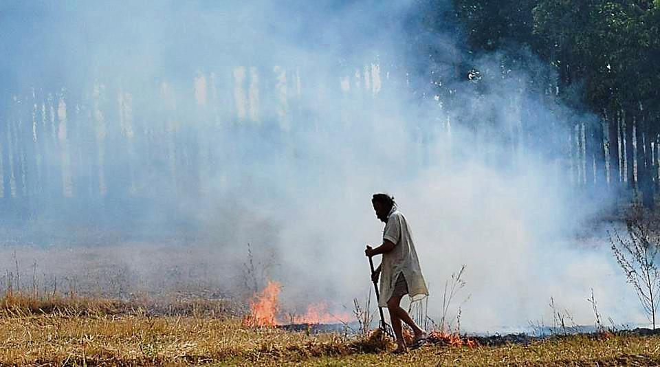 FIRs have failed to prove a deterrent against stubble burning across Mohali district