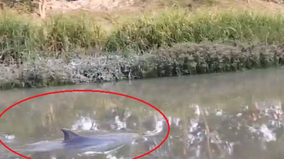 The dolphin  was spotted in West Bengal.