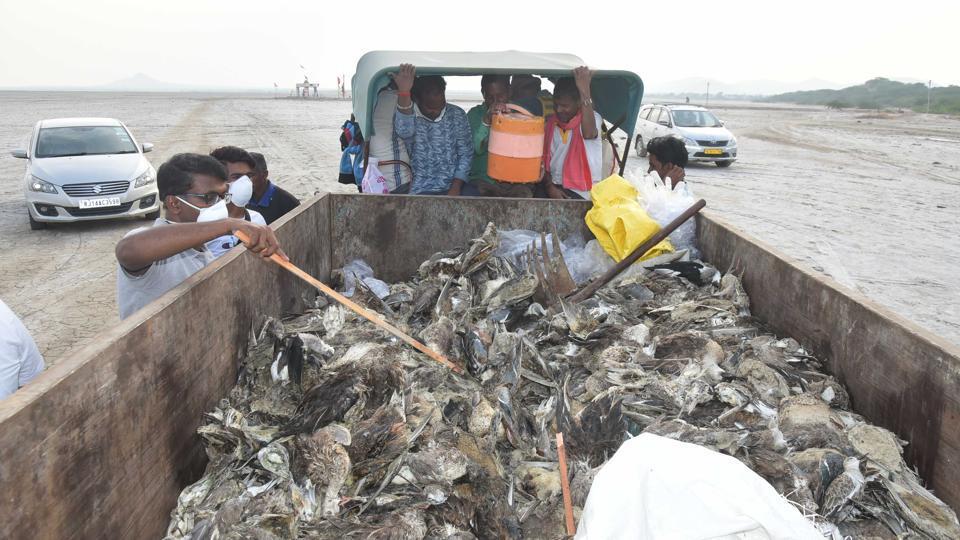Bombay Natural History society officials check the dead birds at the Sambhar Lake in Jaipur, Rajasthan on Wednesday, November 11, 2019.