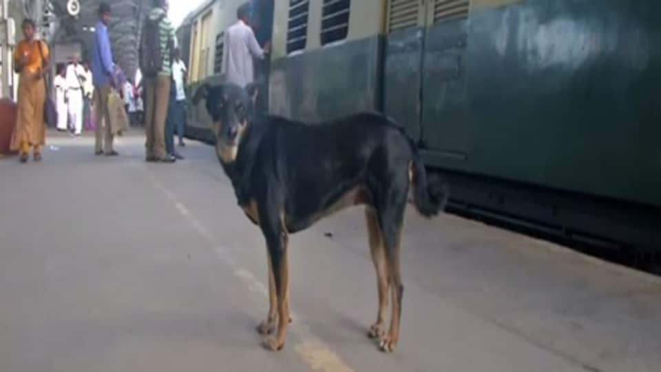 The dog joins the Railway Protection Force (RPF) personnel at the platform and patrols along with them and barks at offenders.
