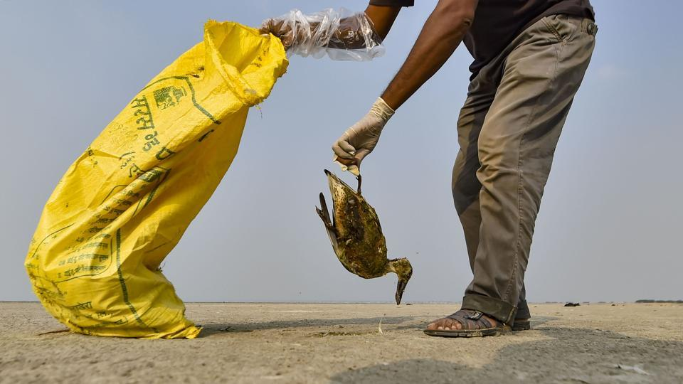 At Rajasthan's Sambhar lake, the carcasses of close to 18,000 migratory birds have been found since November 10.