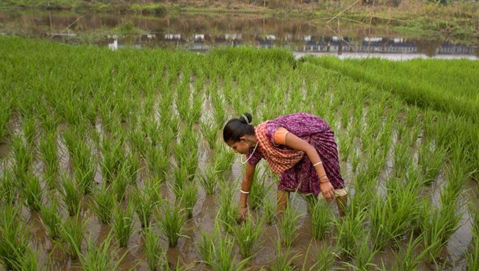 The thinking in many quarters is that a focus on the rural economy could help revive aggregate demand and address the ongoing economic slowdown (AP file photo)