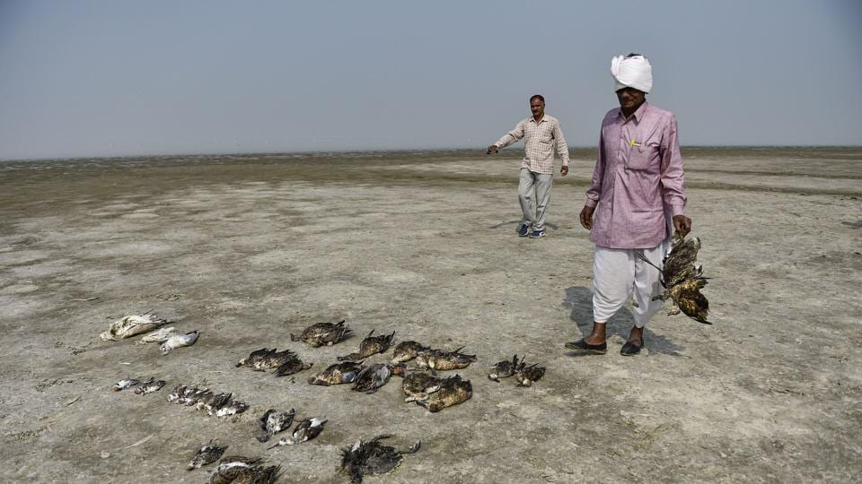 The Bareilly-based Indian Veterinary Research Institute (IVRI) confirmed on Thursday that the cause of death of around 18,500 migratory birds at India's biggest inland salt water wetland, around Sambhar lake,  is botulism, a neuromuscular illness.