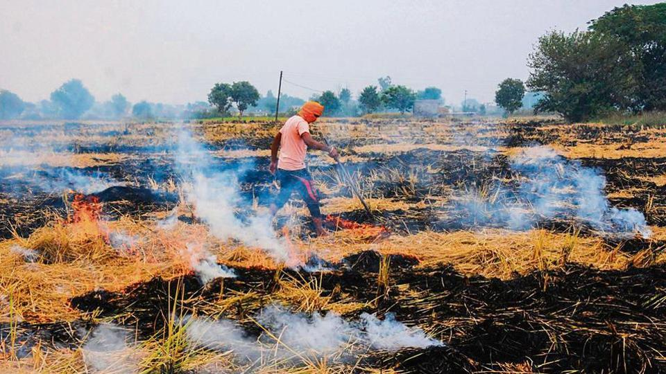 Punjab saw more farm fires this time than last year. Its farmers are being blamed for the air pollution crisis in north India in the past few weeks.