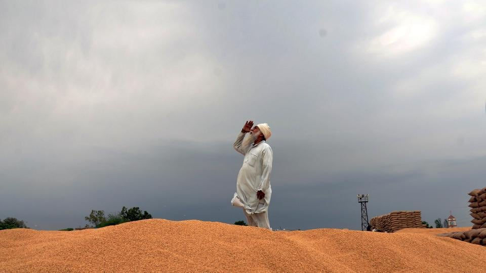 India's wheat production could jump to a second consecutive annual record in 2020 as the wettest monsoon in 25 years is set to help farmers in expanding the area under the winter-sown crop while also boosting yields. But that higher production would add to India's already swelling inventories, potentially forcing the world's second-biggest wheat producer to ramp up procurement of the grain from farmers and provide incentives for overseas sales to support local prices. (Sameer Sehgal / HTArchive)
