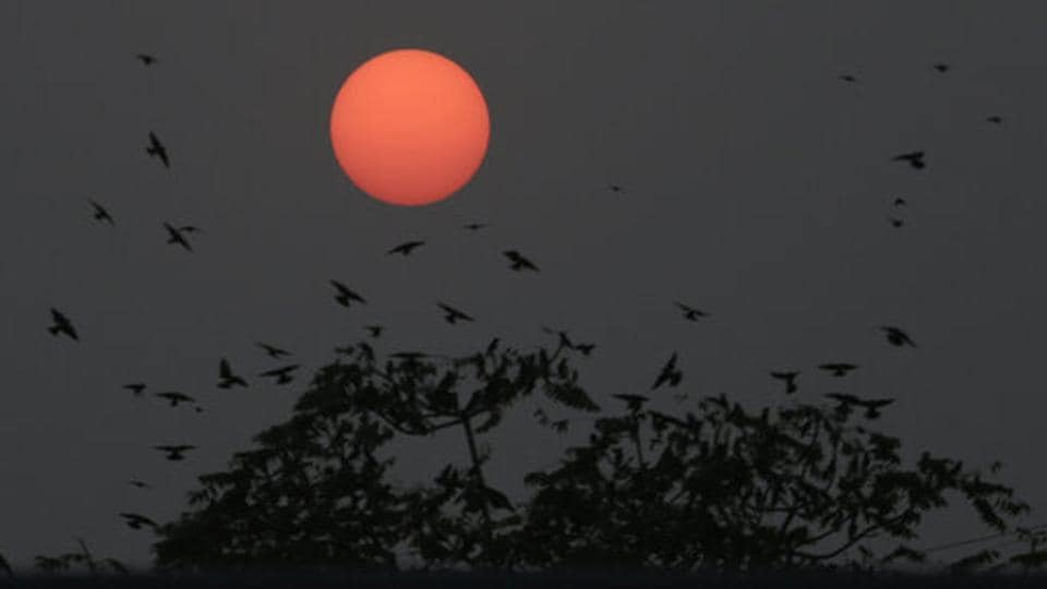 Birds fly around a tree as sun sets in Ahmedabad, Gujarat. (Ajit Solanki / AP)