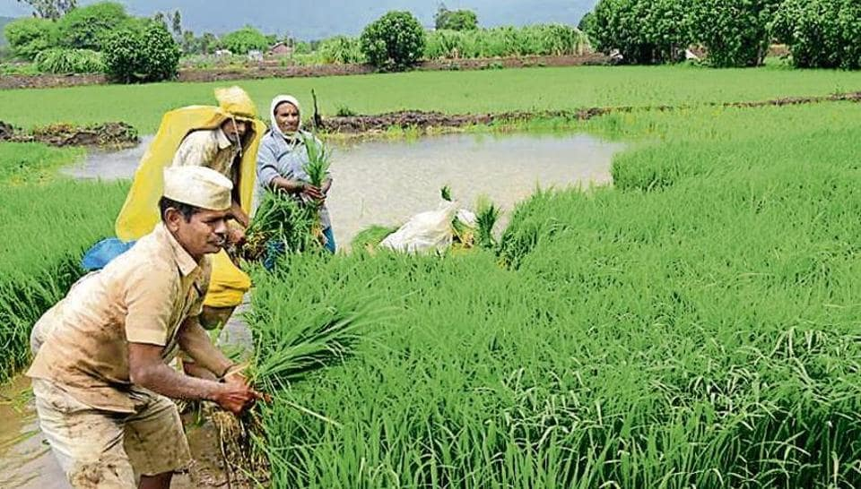 Farmers plant rice in Pune, Maharashtra. A conversation for the future must relate to bringing about structural changes in the modes of production