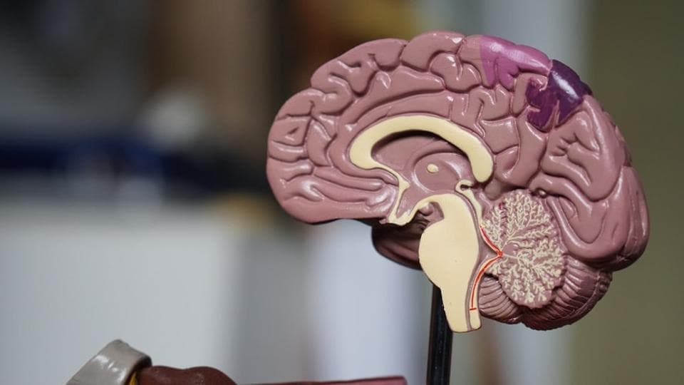 Researchers have identified key networks within the brain which they say play a crucial role in fostering a person to commit suicide.