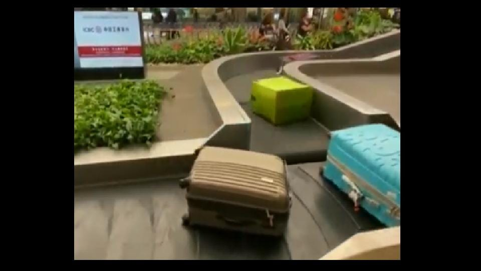 The 'polite' luggage belt has become a hit among netizens.