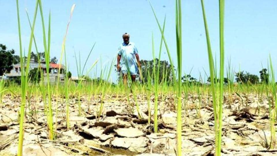 MUnseasonal rain has damaged more than 67.52% of the total kharif crop sown this year.