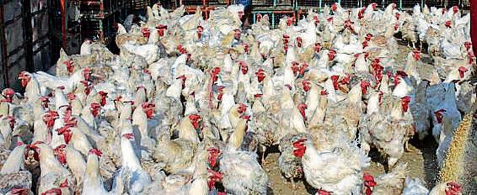 Based on the inspection carried out by the teams last month, several poultry farms lacked cleanliness, dead birds were found on the premises, and non-maintenance and other anomalies were detected.