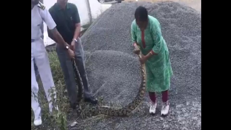 Woman saves 20 kg python, calls it 'bachha'. 'Bravo' says Twitter - it s viral - Hindustan Times