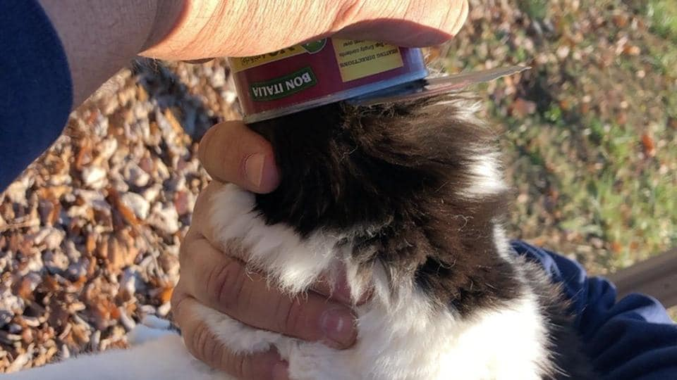 The incident happened in North California,USA, which prompted the Clyaton Fire Department to rush to the feline's rescue.