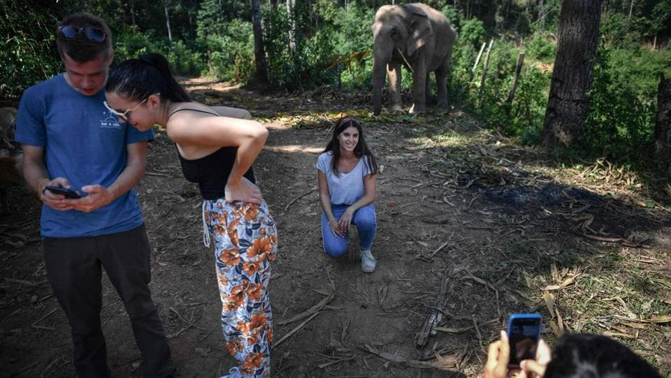 "Tourists take pictures with elephants at the ChangChill elephant sanctuary,Chiang Mai. Here young elephants are ""broken"" to interact with tens of millions of tourists who visit Thailand every year, many eager to capture social media-worthy encounters of the kingdom's national animal playing sports, dancing and even painting. (Lillian Suwanrumpha / AFP)"