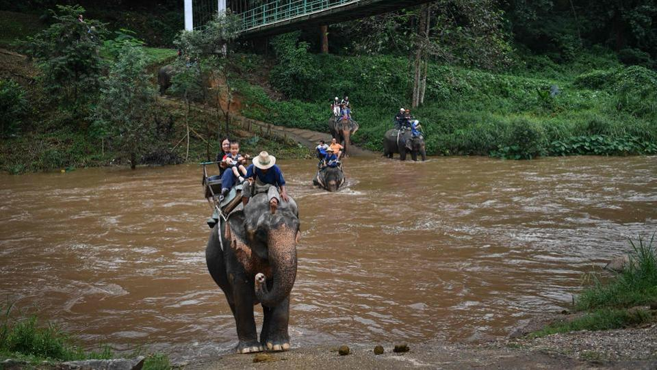 "Tourists ride elephants at the commercial Mae Taeng Elephant Park. In a few months, ChangChill changed its methods to give elephants more space, fewer interactions, and an environment resembling life in the wild. ""We don't force them to do what they wouldn't instinctively do,"" says director Supakorn Thanaseth. As a result, they are ""less sick, calmer"". (Lillian Suwanrumpha / AFP)"