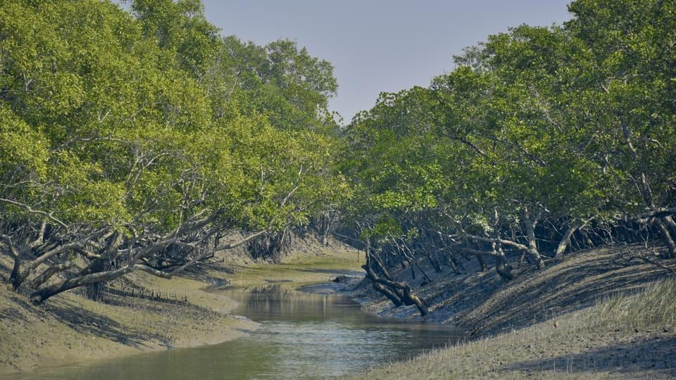 The Sunderbans is the world's largest mangrove delta and home to the Royal Bengal Tiger.