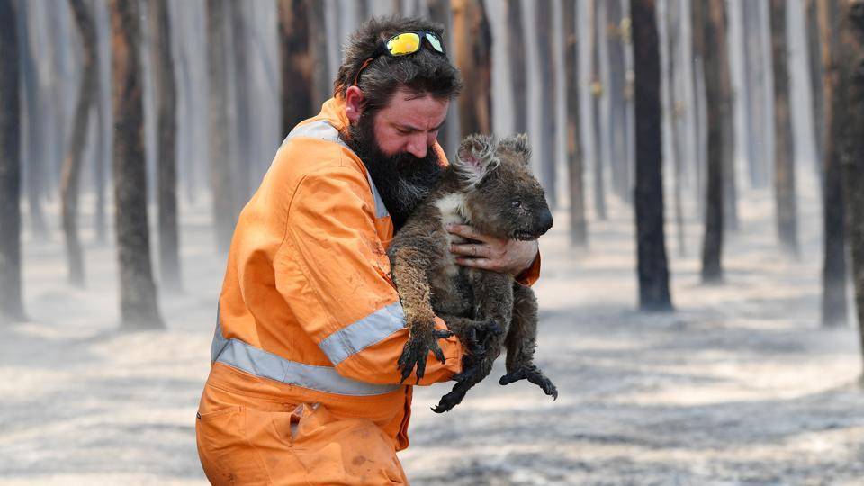 Adelaide wildlife rescuer Simon Adamczyk is seen with a koala rescued at a burning forest near Cape Borda on Kangaroo Island, Australia on January 7.