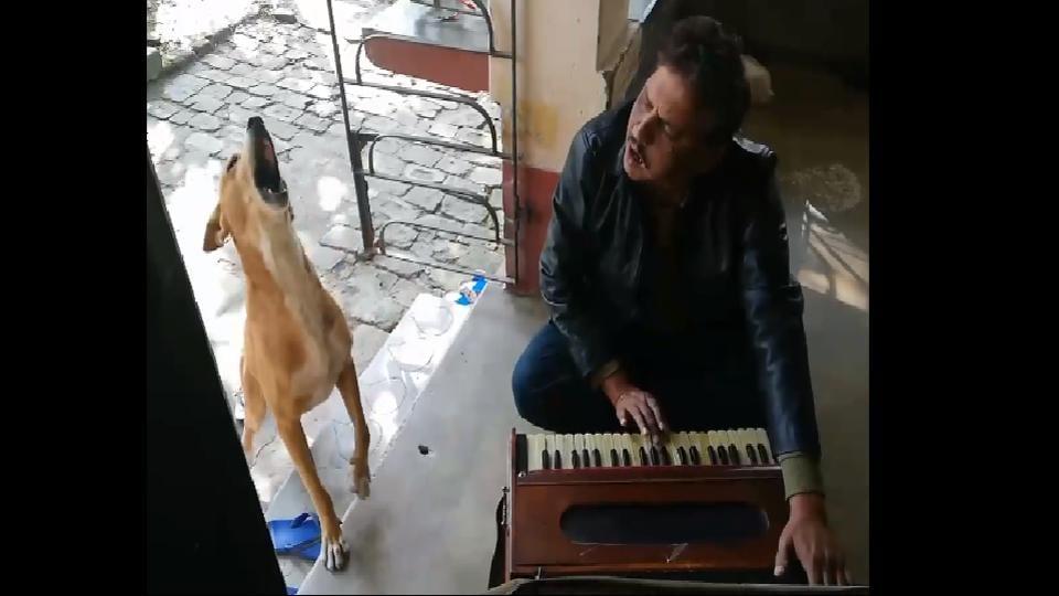 The dog joined his human to sing 'Teri Meri Kahani' by Ranu Mondal.