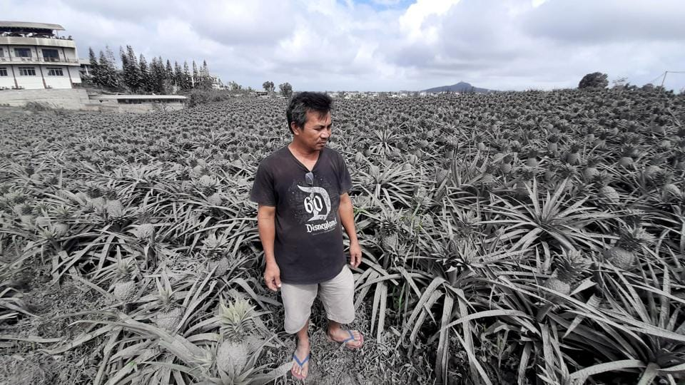 Farmer Jack Imperial at his pineapple plantation covered with ash from the erupting Taal Volcano, in Tagaytay, Philippines. The volcano that has been spewing ash for days appeared to be calming down on Thursday, but seismologists said the danger of an eruption still remained high. (Adrian Portugal / REUTERS)