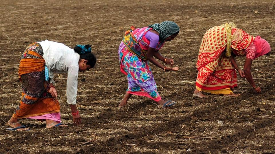 The Act imposes restrictions on the agricultural economy by limiting quantities traders can buy from farmers and hold as stock. (ANI Photo)