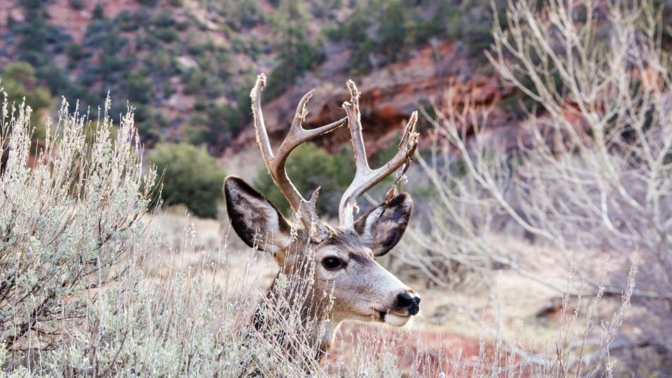 The video of deer sharing its antlers created quite a stir online (representational image).