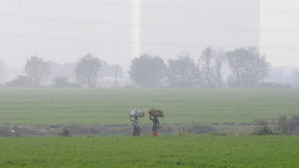 Farmers on way back to home after harvesting in field, in Greater Noida, India.