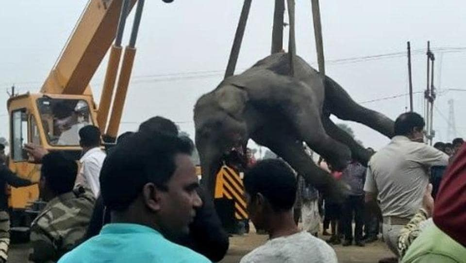 A female elephant in the herd was mauled by the speeding vehicle and got stuck between the wheels. It took a crane to extricate the dead elephant from under the truck.