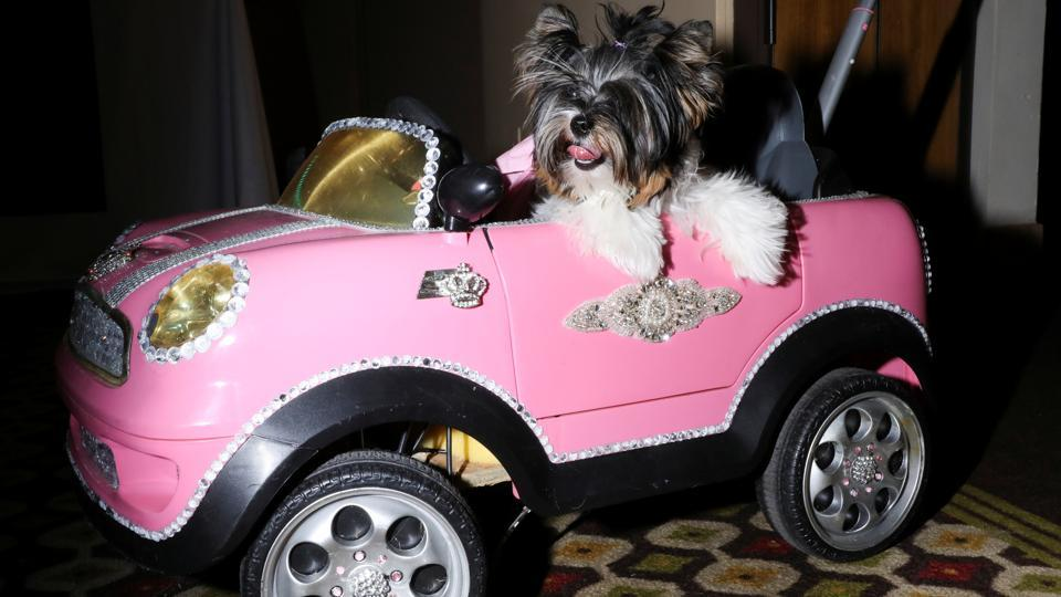 A dog sits in a toy car at the 17th annual New York Pet Fashion Show in the Manhattan borough of New York, U.S., February 6, 2020. REUTERS/CAITLIN OCHS
