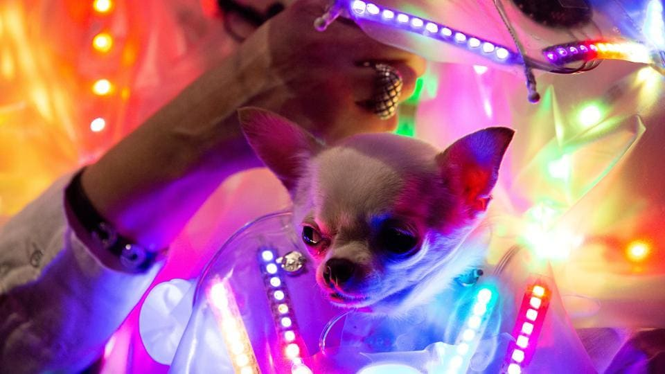 A woman holds a dog dressed in neon lights at the 17th annual New York Pet Fashion Show in the Manhattan borough of New York, U.S., February 6, 2020. REUTERS/Caithlin Ochs (REUTERS)