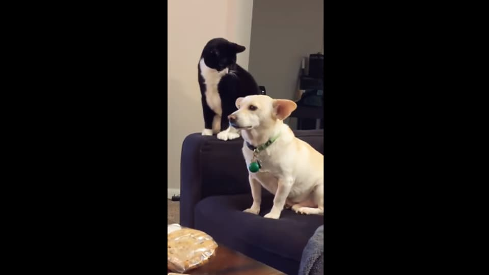 Cat thinks long before hitting dog, what follows will make you LOL. Watch