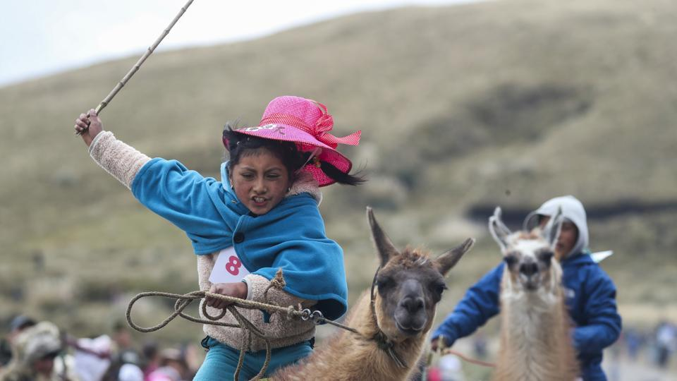 Milena Jami whips her llama to win the first place in the Llama races for children of ages seven and eight. Nine-year-old Ibeth Santafé, three times a winner in past races, was sombre after finishing third. But she came out a winner in a llama-training contest, showing mastery over her beast. (Dolores Ochoa / AP)