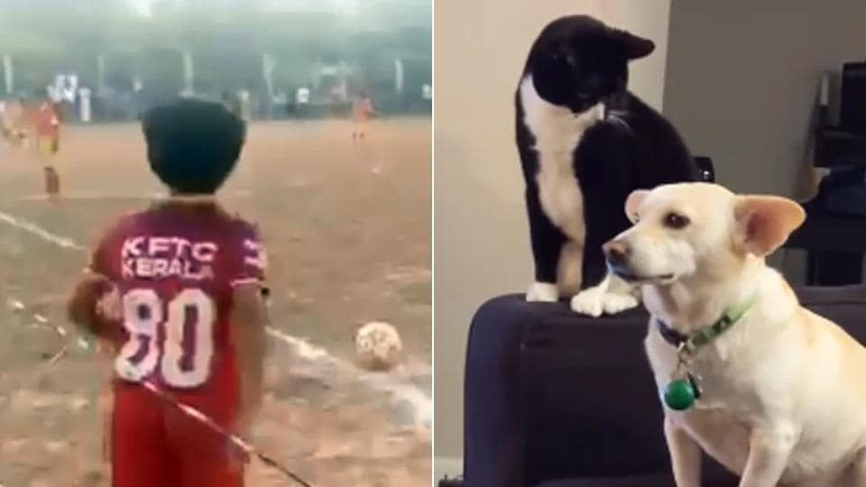 Kerala kid's 'zero degree' goal to cat thinking long before hitting dog, 7 viral videos of the week