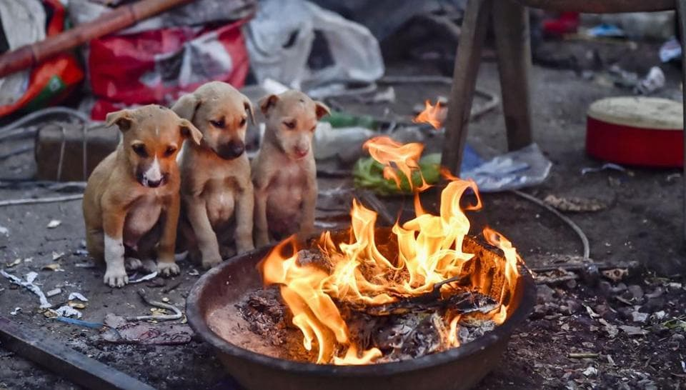 Puppies sit near a bonfire during a cold morning in New Delhi, Sunday, Jan. 19, 2020.