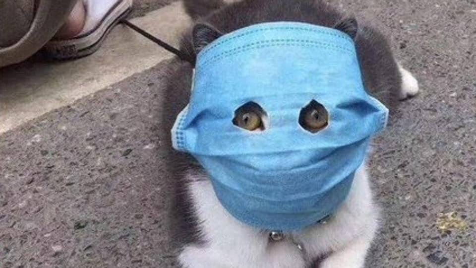 Worried cat owners are making felines wear masks for coronavirus protection