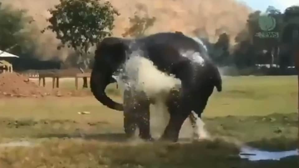 Elephant breaks water sprinkler, what happens next will win you over. Watch