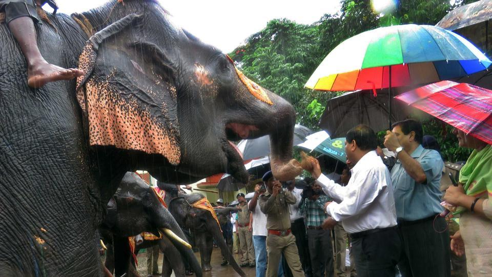 Four killed, 5 hurt in elephant attack in Odisha's Puri