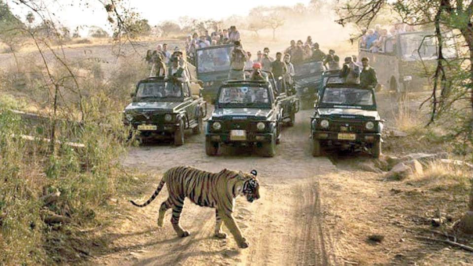 In Arunachal Pradesh, plan to build road through tiger reserve under lens