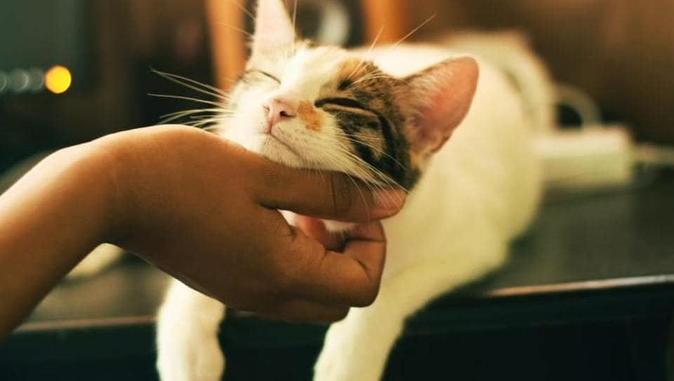 Playing special music tailored for cats may help reduce the feline's stress levels during a visit to the veterinary clinic.