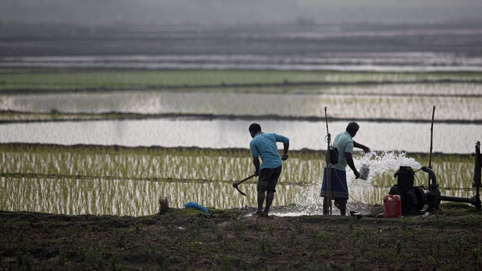 Indian farmers work in a paddy field on the outskirts of Guwahati.
