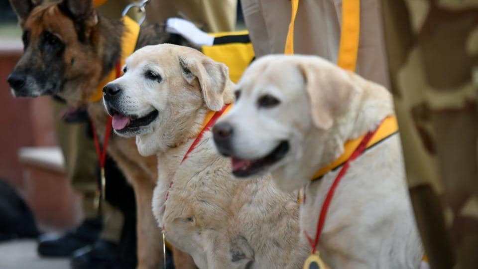 CISF dogs during their retirement ceremony in New Delhi in  November 19, 2019.