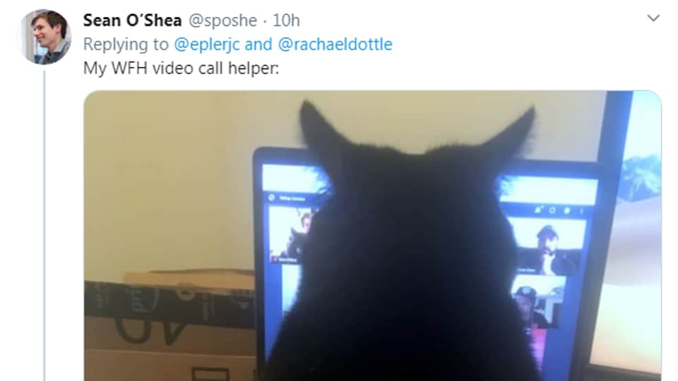 Many people working from home are sharing images of their pets with witty co-worker related caption.