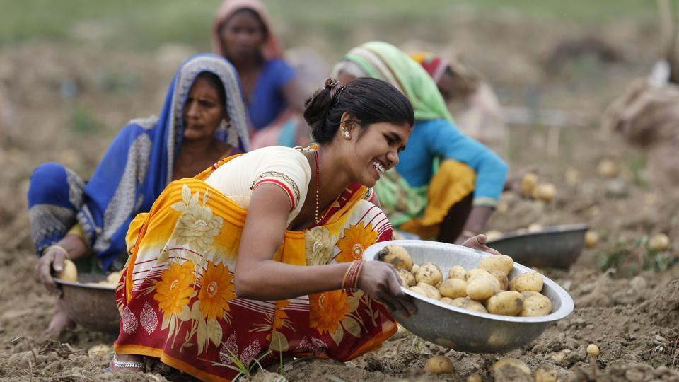 Farmers work in a potato field on the outskirts of Kaushambi, about 60 kilometers from Prayagraj, India.