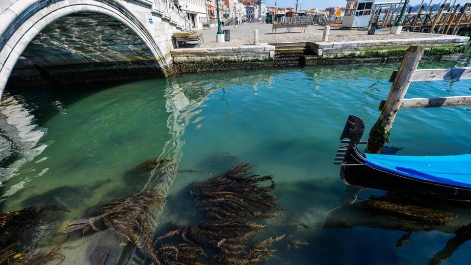 A view shows seaweed in clear waters in Venice on March 18, 2020 as a result of the stoppage of motorboat traffic, following the country's lockdown within the new coronavirus crisis.