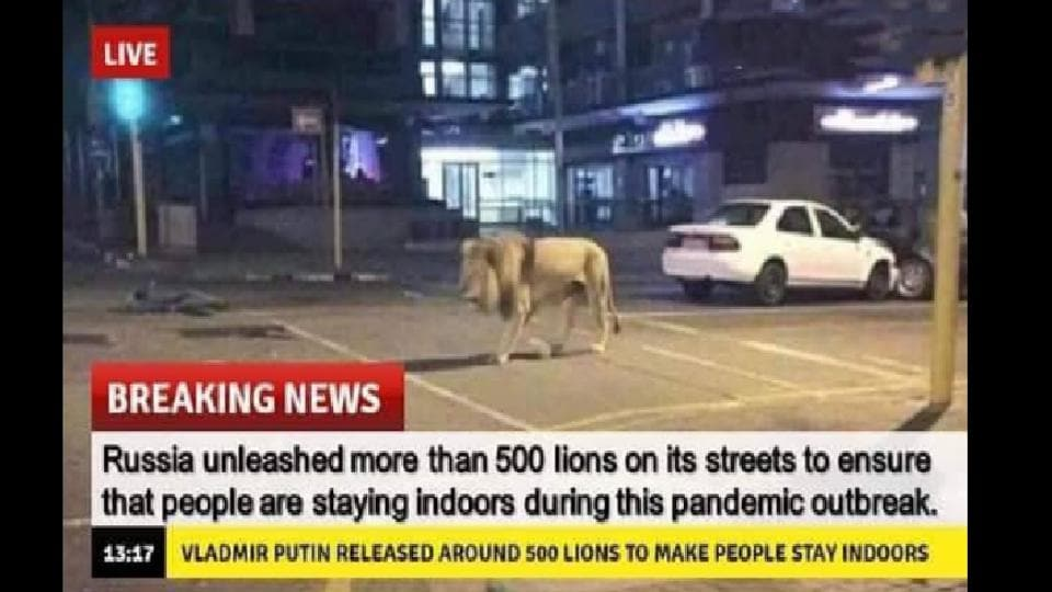 The news of lions released in Russia to enforce lockdown is false.