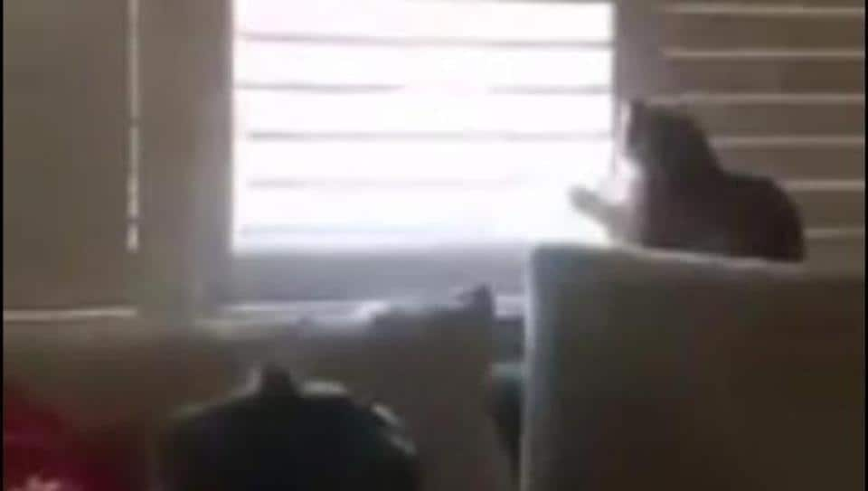 The image shows a cat staring through a window.