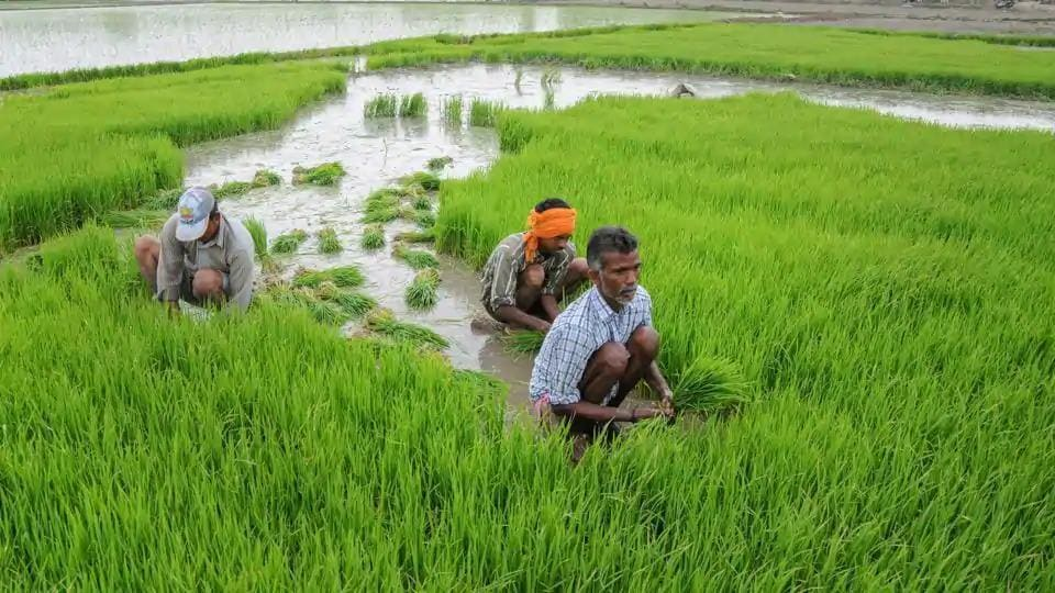 Agriculture employs nearly nearly 500 million people or half the population in India.